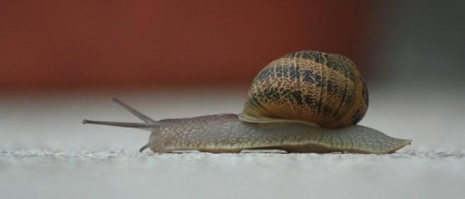 snail-368763_1920